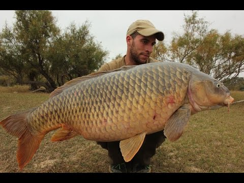 EBRO - VI ENCUENTRO CARPFISHING CASPE WEBCARP