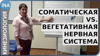 Соматическая и вегетативная нервная система. Л.Ф.Васильева. Кинезиология в Германии