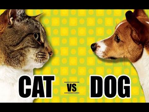 КОШКИ ПРОТИВ СОБАК! CATS VS DOGS! ВЕЧНЫЙ СПОР КТО ЛУЧШЕ?