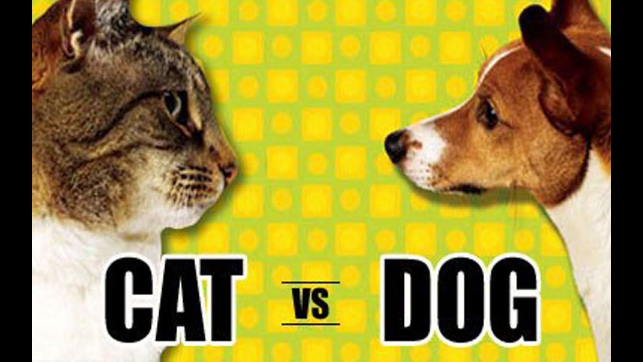 Смотреть коты и собаки 1