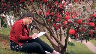 Student life at Victoria University of Wellington – an undergraduate perspective