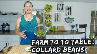 Farm to Table: Collard Beans (Yes I said collard