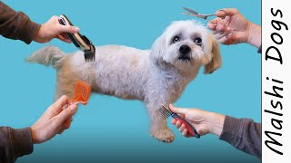 How to cut a dog's hair? A basic Grooming tutorial  Wookidog 4K Malshi Dog Grooming Video
