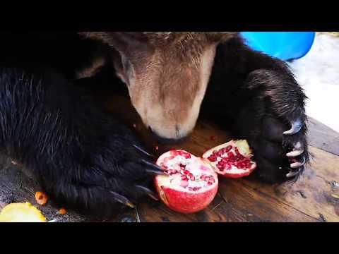 Гранаты медведь особенно уважает