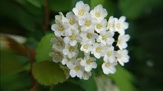 Красота цветов в фотографиях