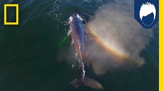 Do Your Swimming Skills Match Up to a Humpback Whale's? | National Geographic