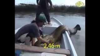 Ай да сомик ! Невероятная рыбалка