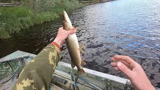 Рыбалка пошла День второй Окунь и щука на спиннинг и конечно язь на удочку
