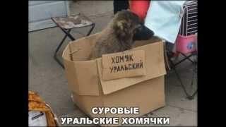 Приколы из сурового Челябинска