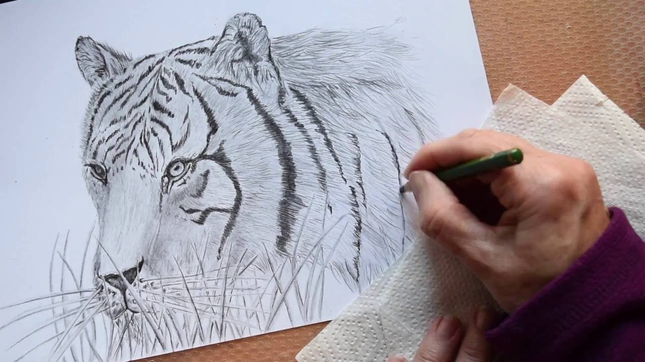how to draw a tiger use the grid method to transfer your photos