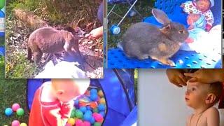 Канал о жизни в Австралии, о детях и для детей, Chanal Introduction(http://join.air.io/pro Моя партнерка по заработку на ютубе. Присоединяйтесь! Видео о Моем Канале про жизнь в Австрал..., 2015-06-08T13:26:28.000Z)