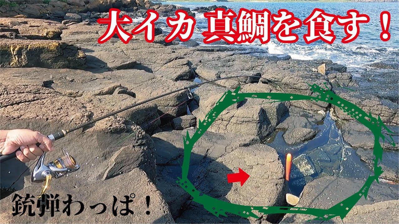 岩場で穴遊びをしていたら沖目で釣れた巨大イカが真鯛を一飲み