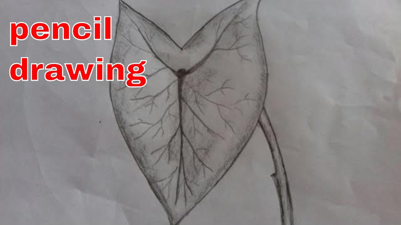 Elephant ear leaf drawing how to draw a leaf easy leaf drawing with pencil shading