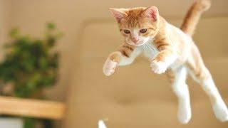 Приколы с Котами - Смешные коты и кошки 2017 - приколы видео смотреть бесплатно 2017