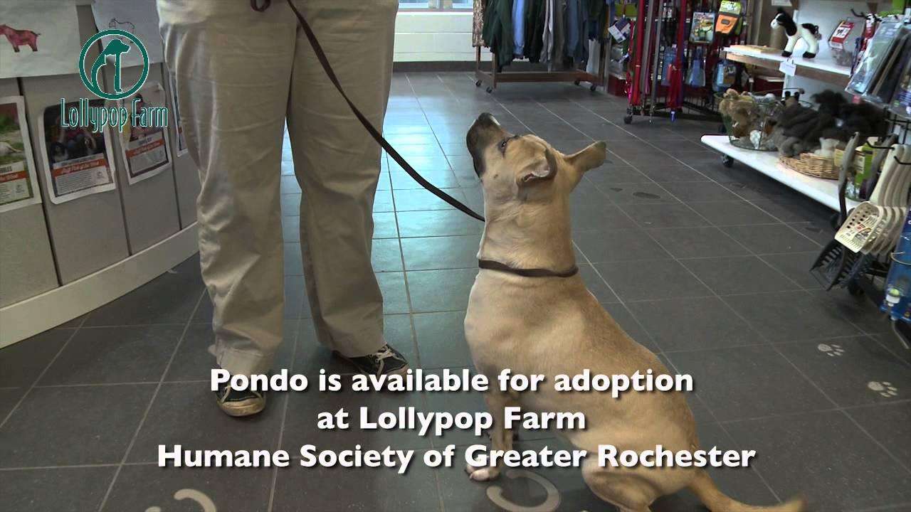 Adopt Pondo - Lollypop Farm Adoptable Pet