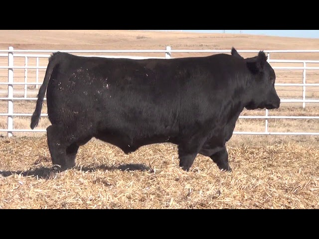 Express Ranches Lot 114