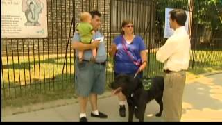 Service Dogs Always Allowed: It's The Law