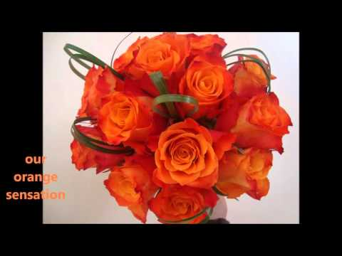 Crown Heights Florist NY Same Day Delivery