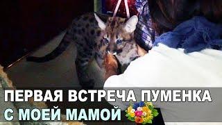Первая РЕАКЦИЯ МОЕЙ МАМЫ НА ПУМУ / Знакомство нового котенка с родными