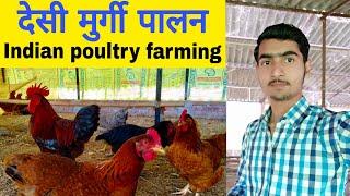 Desi murgi palan,देसी मुर्गी पालन कैसे करें।