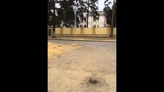 Собака у детсада в Чите