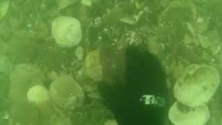 Video Cockle Clam Dive download MP3, 3GP, MP4, WEBM, AVI, FLV Desember 2017