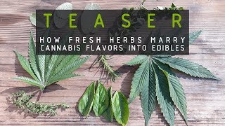 TEASER How Herbs Marry Cannabis Flavors Into Edibles (OUT NOW ON RUFFHOUSE)