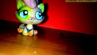Клип:Котик, котик, котик...
