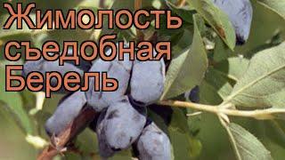 Жимолость съедобная Берель (lonicera edulis) ???? Берель обзор: как сажать, саженцы жимолости Берель