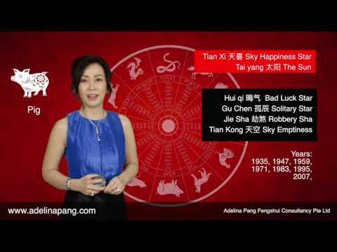 2018 Horoscope Forecast by Adelina Pang Pig