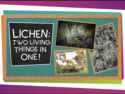 Lichen: Two Living Things In One