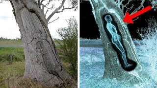 10 Scary Discoveries Found In Unexpected Places