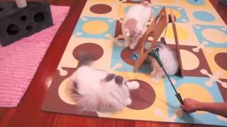 белое семейство котов экстремалов