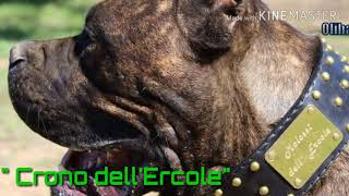 Video Cane Corso da Lavoro #workingcanecorso #molossidellercole #cronodellercole download MP3, 3GP, MP4, WEBM, AVI, FLV Oktober 2018