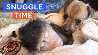 BEST CUDDLE BUDDIES EVER: Snuggling Animals That You Wish You Could Join | The Dodo Daily