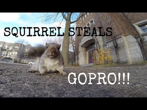 Watch: This Is What Happens When You Give a Squirrel a GoPro