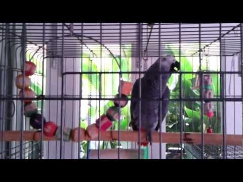 Larry the African Grey Parrot from Singapore says Mummy loves you & wishes you a Happy Birthday!