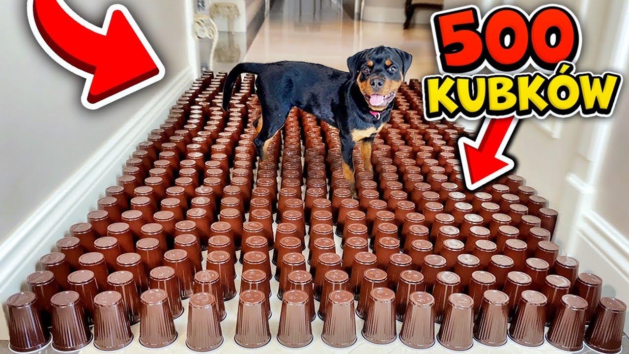 PIES ABRA vs 500 PLASTIKOWYCH KUBKÓW! 😂 (reakcja)