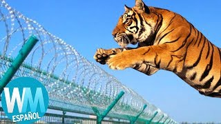 ¡Top 10 ESCAPES de ANIMALES de Zoológicos! thumbnail