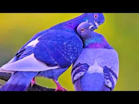 Love is Blue -- Paul Mauriat