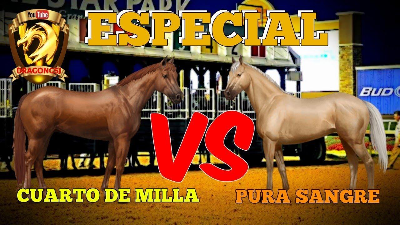 ESPECIAL - CUARTO DE MILLA VS PURA SANGRE - YouTube