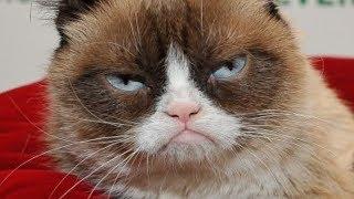 The Untold Truth Of Grumpy Cat