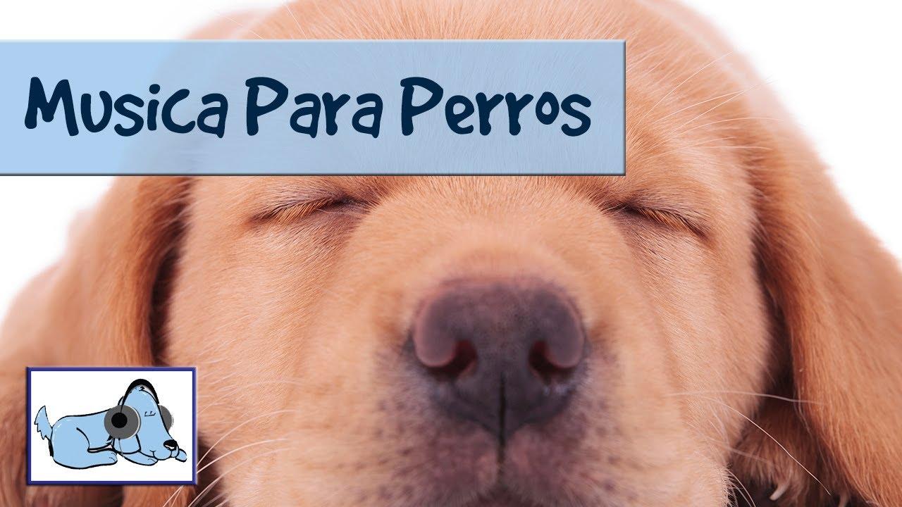 sirve la pastilla del dia siguiente en perros