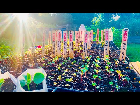 DIY Organic Weed Removal   Fall Crop Ready   what Makes YOU Happy?