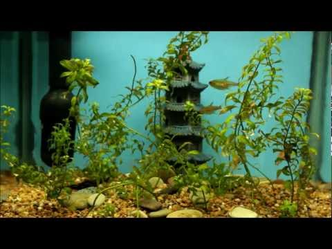 Why I Keep Live Plants In 5 Fish Tanks