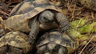 Геленджикский «Сафари-парк» восстанавливает популяцию редких животных