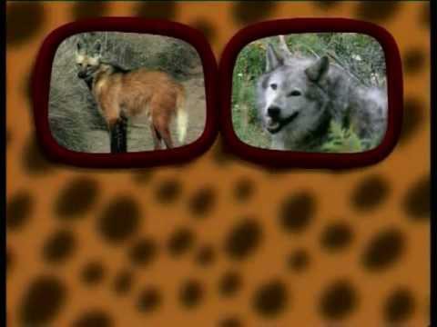 Λύκοι- Ο μαγικός κόσμος των ζώων