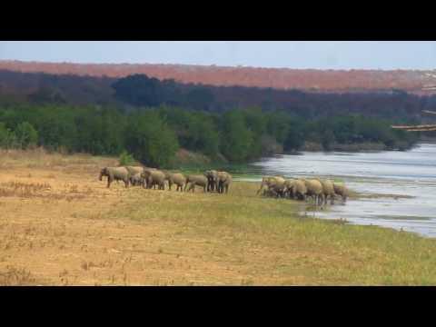 MVI 2528   Olifanten steken rivier over Kruger NP