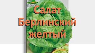 Салат обыкновенный Берлинский желтый Кочанный 🌿 обзор: как сажать, семена салата