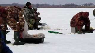 Зимняя рыбалка. Новосибирск Обское Водохранилище. Окунь, сорога, ерш,   много).